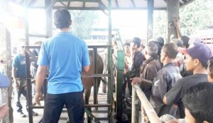 pasar-hewan-beringkit-gunakan-timbangan-digital-800-2019-03-06-120346_0.jpg