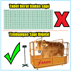 timbangan_sapi_digital.jpg